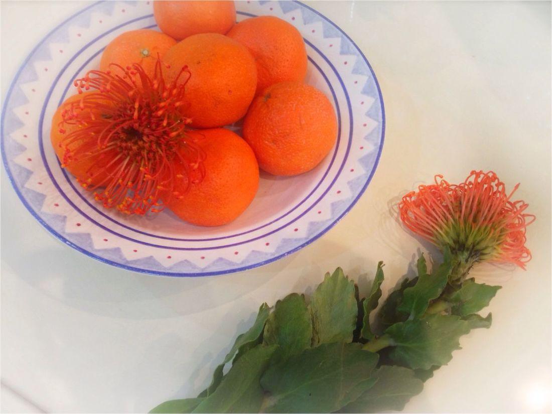 Plate of Orange Getting Inspired Enjoying Life Urban Nature Taking Photos