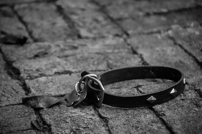 In memory of my dog and friend, Dude, who I recently lost. Black And White Brick Bricks Close-up Collar Day Dog Dog Collar No People Outdoors Studded Studded Collar