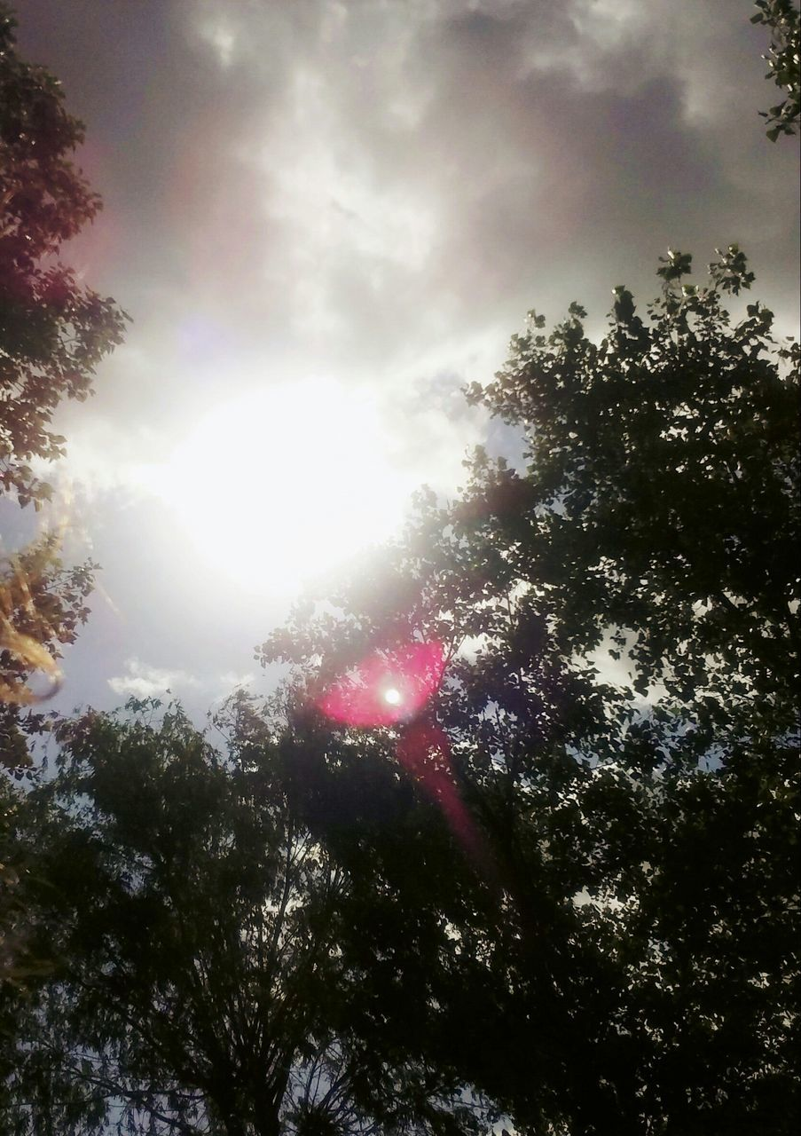 sunbeam, tree, sun, sky, lens flare, nature, low angle view, sunlight, no people, beauty in nature, outdoors, scenics, cloud - sky, day