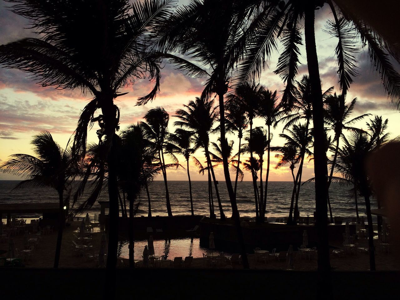 Palm Tree Sea Tree Water Beauty In Nature Scenics Nature Beach Sky Sunset Tranquility Horizon Over Water No People Tranquil Scene Outdoors Cloud - Sky Silhouette Day
