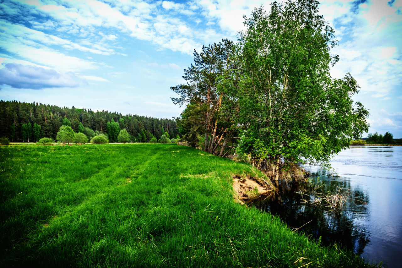 grass, tree, tranquil scene, green color, nature, sky, scenics, tranquility, beauty in nature, growth, cloud - sky, landscape, day, no people, idyllic, water, outdoors, field