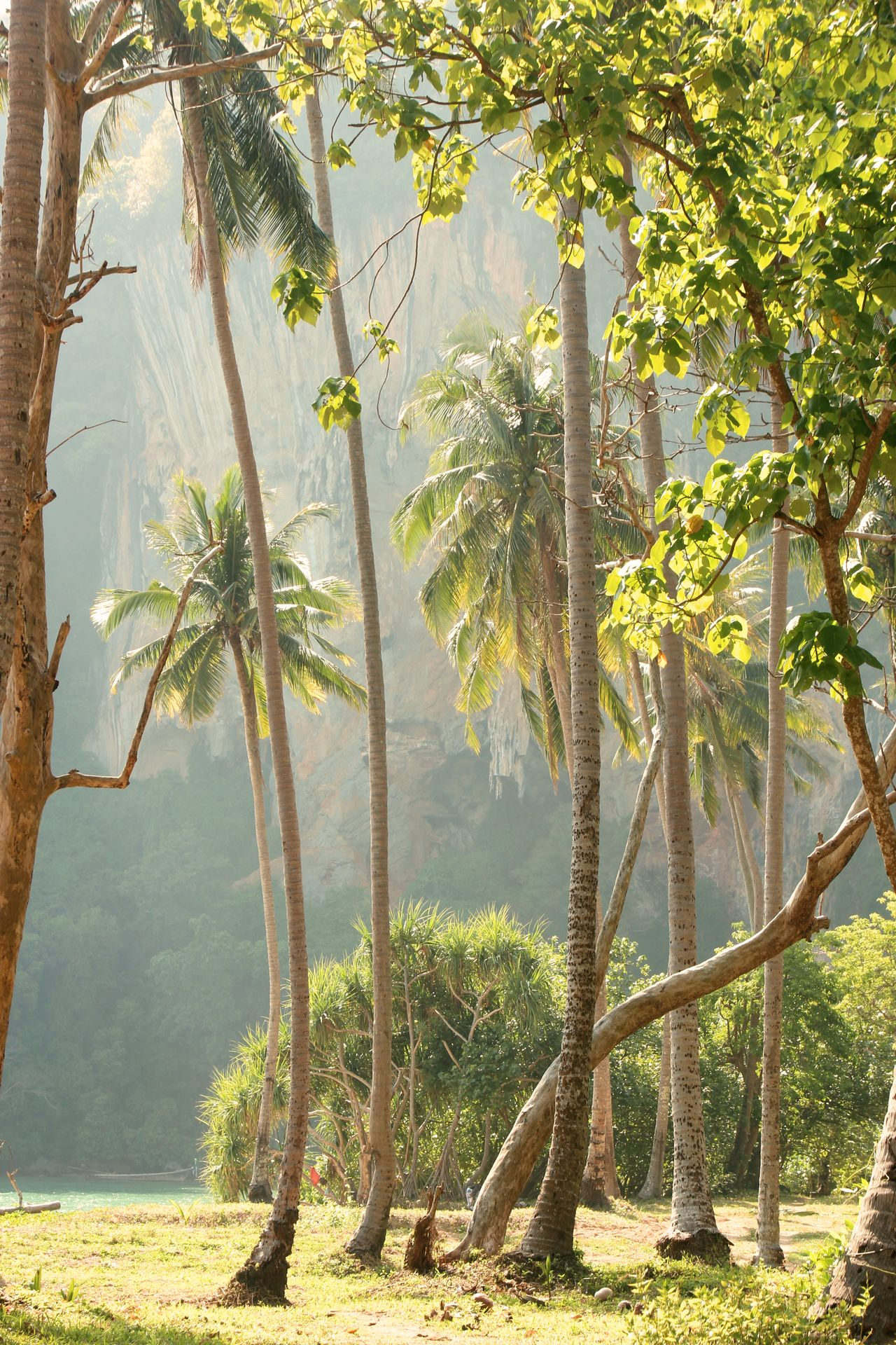 Day Ecosystem  Environment Fog Forest Heat - Temperature Landscape Mountain Natural Parkland Nature Nature Reserve No People Outdoors Palm Palm Tree Silhouette Palmtree Paradise Sky Thailand Tree Tropical Climate Water