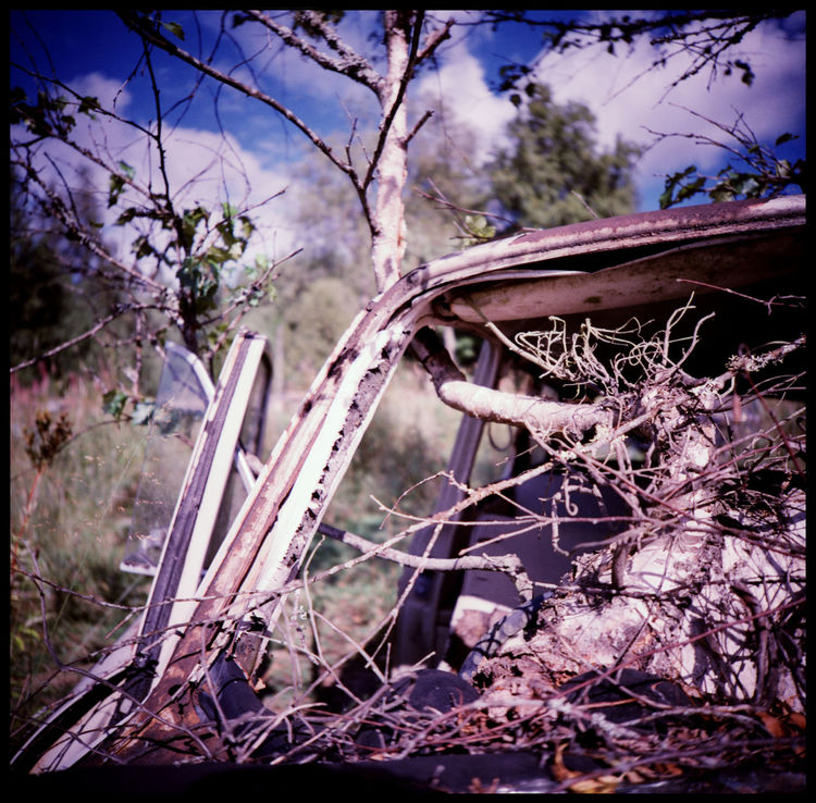 The beauty of decay in the abandonded car cemetery of Båstnäs Abandonded American Cars Apocalypse Art Båstnäs Båstnäs Car Cemetery Båstnäs Töcksfors Car Cemetery Forrest Lomography Metal And Rust Metal In The Forrest No People Powerful Nature Rust And Cars Scandinavia Sweden Sweden Forrest Sweden Nature Travel Trees In Cars Trip Vintage Car Vintage Cars Xpro The Photojournalist - 2017 EyeEm Awards