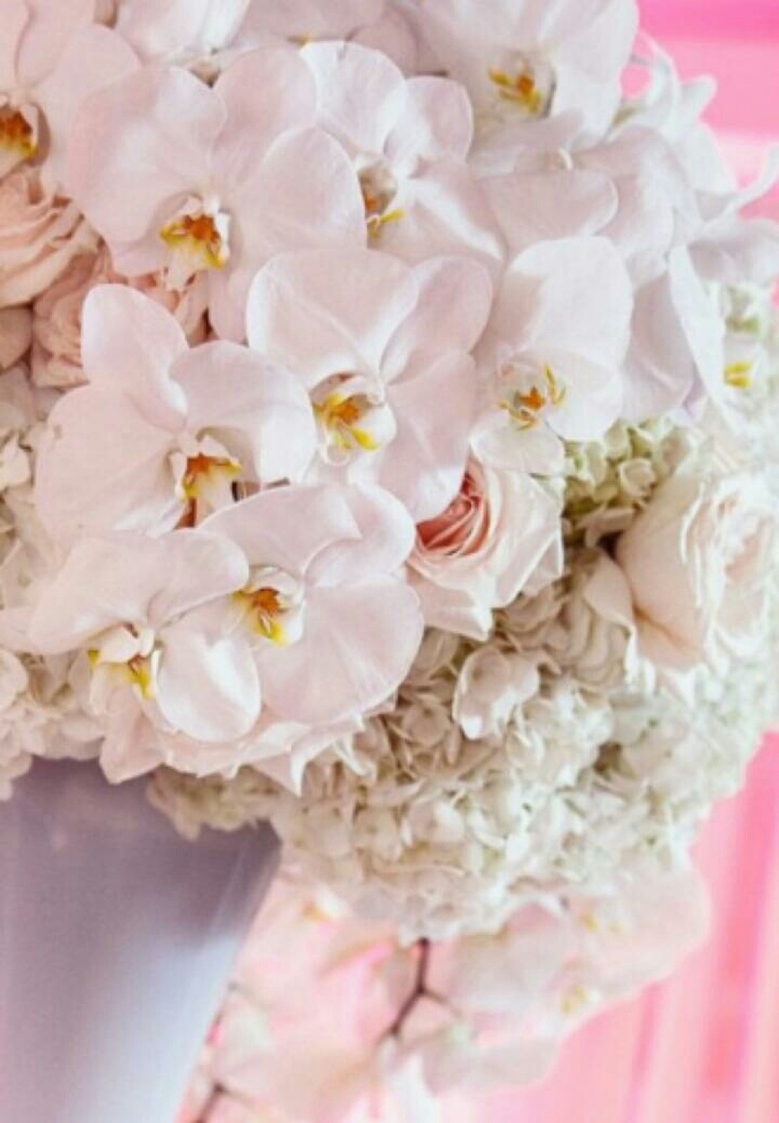 flower, freshness, petal, fragility, flower head, beauty in nature, full frame, backgrounds, pink color, close-up, nature, white color, growth, blooming, blossom, indoors, bunch of flowers, stamen, pollen, pink