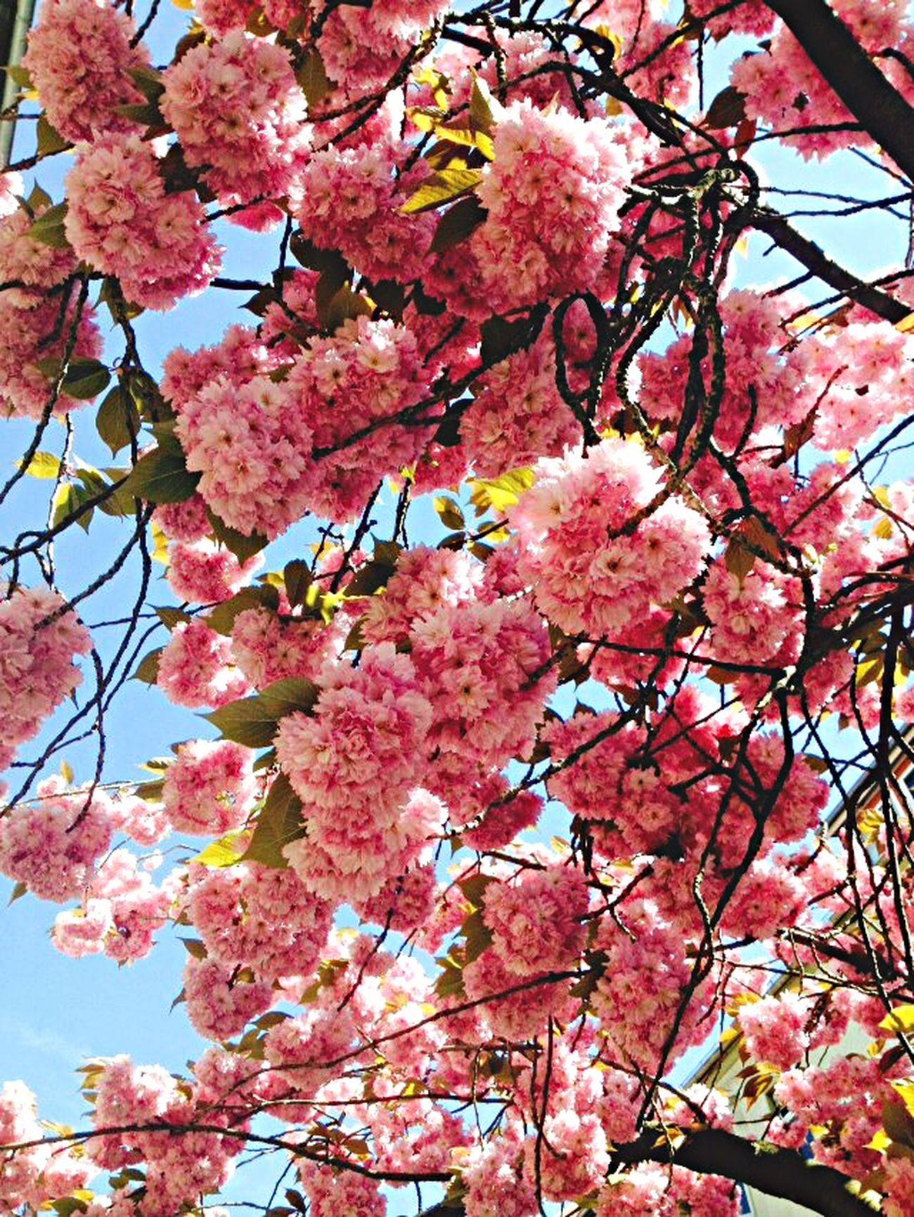 Spring in Braunschweig mit Heiko Heinkele Colours Enjoying Life Flowerporn