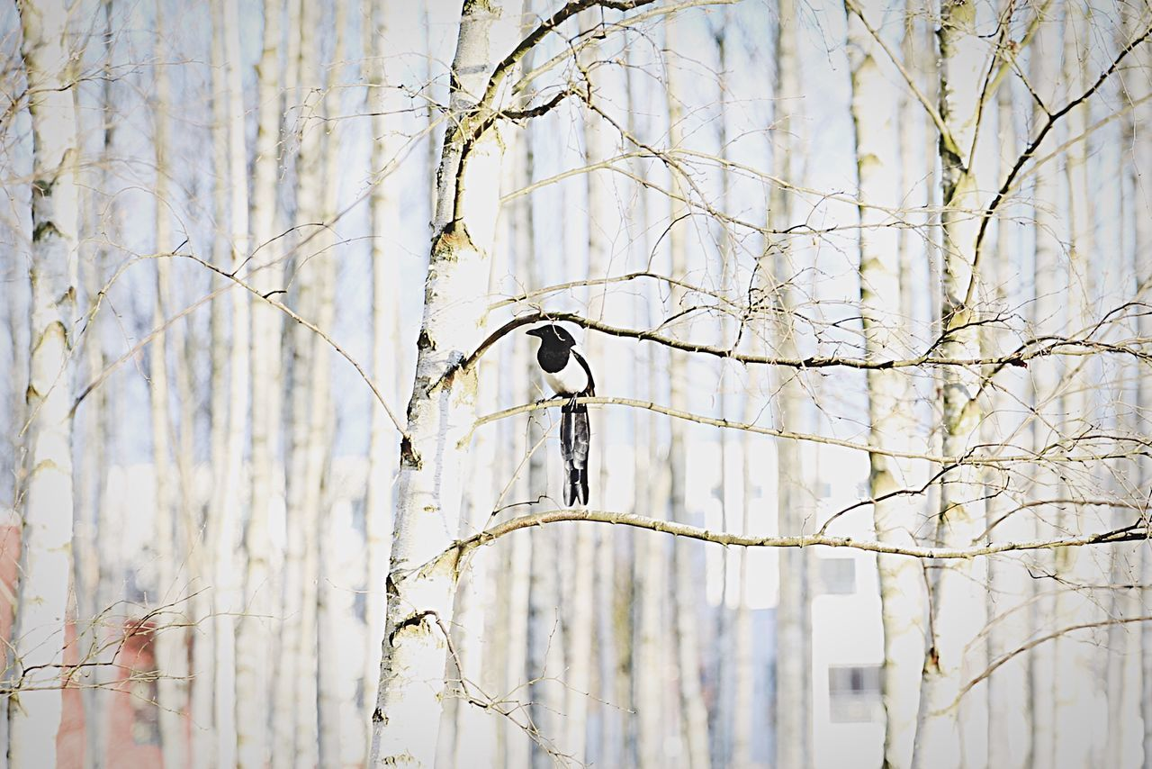 Vogel Bird Photography Bird Birds_collection EyeEm Birds Magpie Elster Nature EyeEm Nature Lover Nature Photography