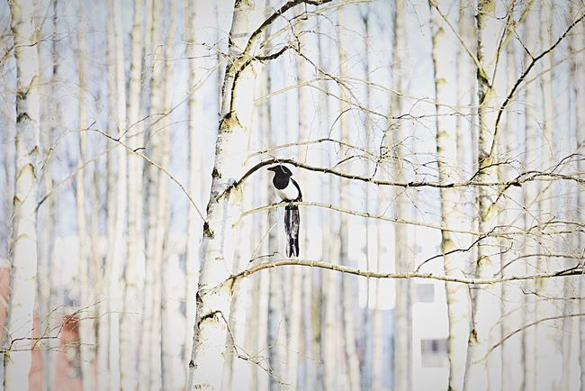 Vogel Bird Photography Bird Birds_collection EyeEm Birds Magpie Elster Nature EyeEm Nature Lover Nature Photography