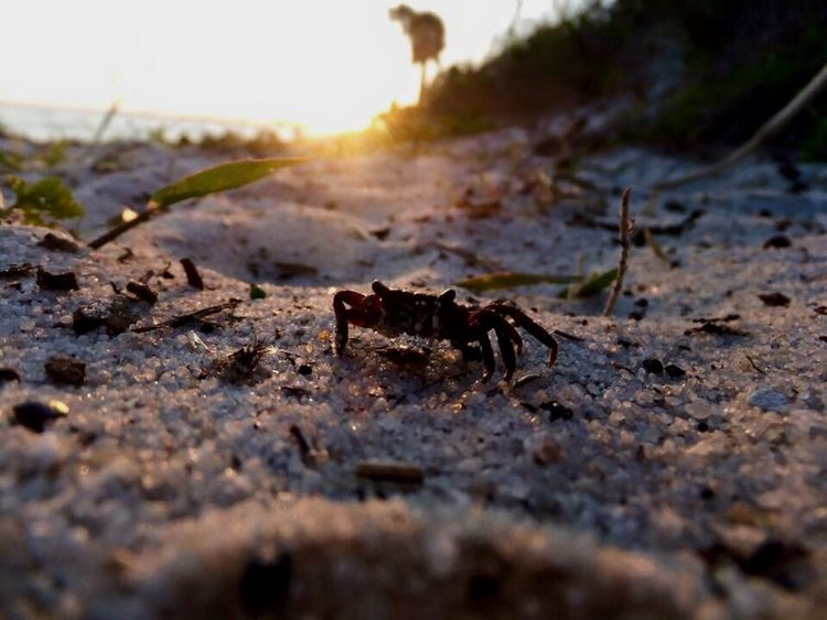 Feelingcrabby Crablife Crab Beach Photography Beachlife Nature_collection Sky_collection Paradise EyeEm Nature Lover Scenery Shots EyeEm Best Shots Outdoor Photography EyeEm Gallery Simplyscenic Simplyscenic_photography