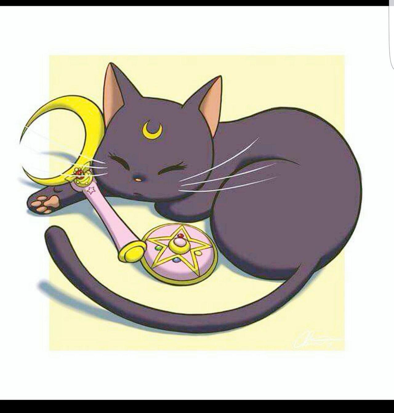🐱 sairlor moon Sailormoon Sailor Moon Domestic Animals Animal Themes Cat Pets