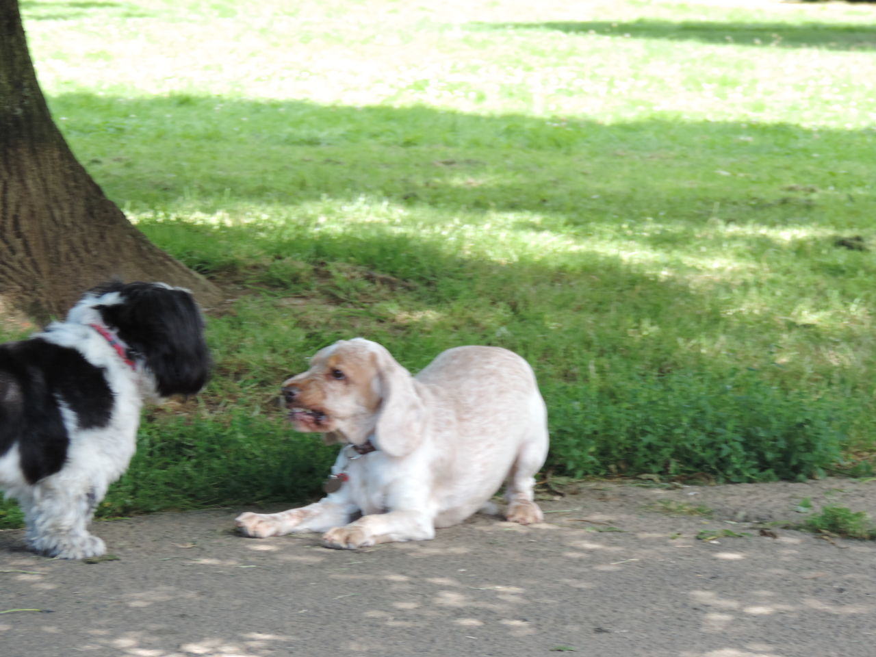dog, domestic animals, pets, animal themes, grass, two animals, mammal, day, outdoors, no people, nature