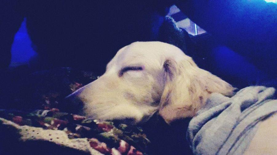 Sleeping Dog Dog Love Petstagram DogLove