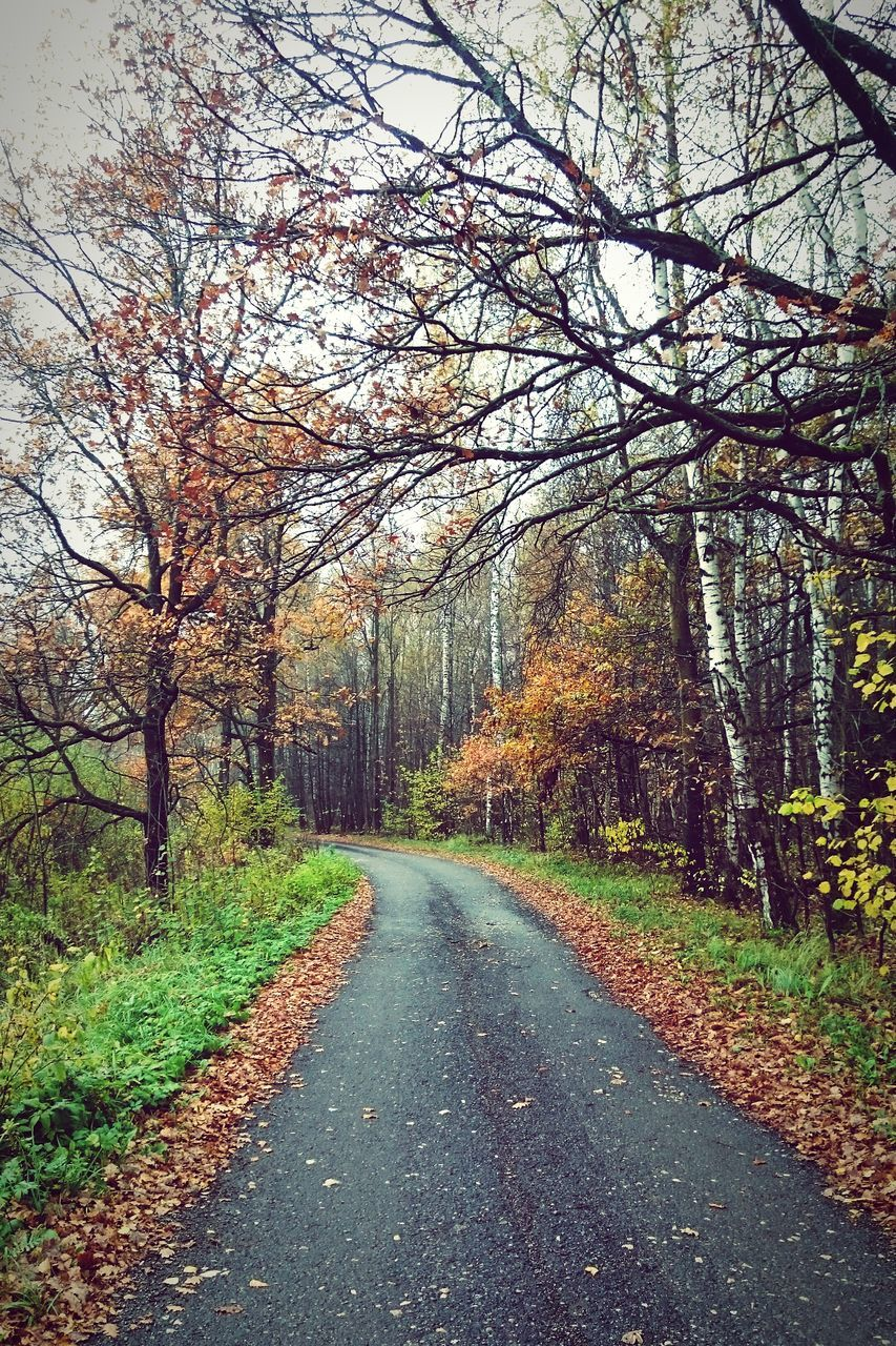 tree, autumn, nature, road, the way forward, tranquility, beauty in nature, scenics, tranquil scene, no people, day, outdoors, change, branch, forest, bare tree, sky