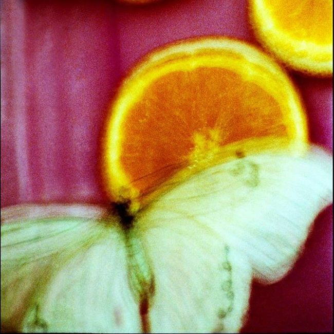 цветныекартинки Film Filmfoto 35mm Colorpicture Decor Design Art Photoart фото Butterfly 45 *45 см отлично украсят любой интерьер