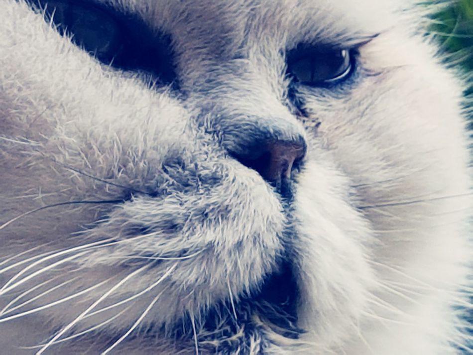 Freddie My Cat