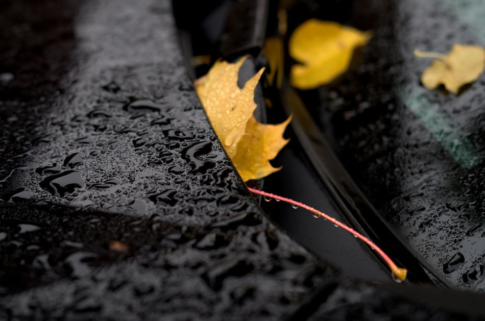 Cars in the fall Prime Lense Prime Lens 50mm Fall Yellow Leaf Pentax Selective Focus Close-up Car Black Cars Cars In The Fall Rainy Days Autumn Premium Collection Rustproofing Rust Car Maintenance The EyeEm Collection