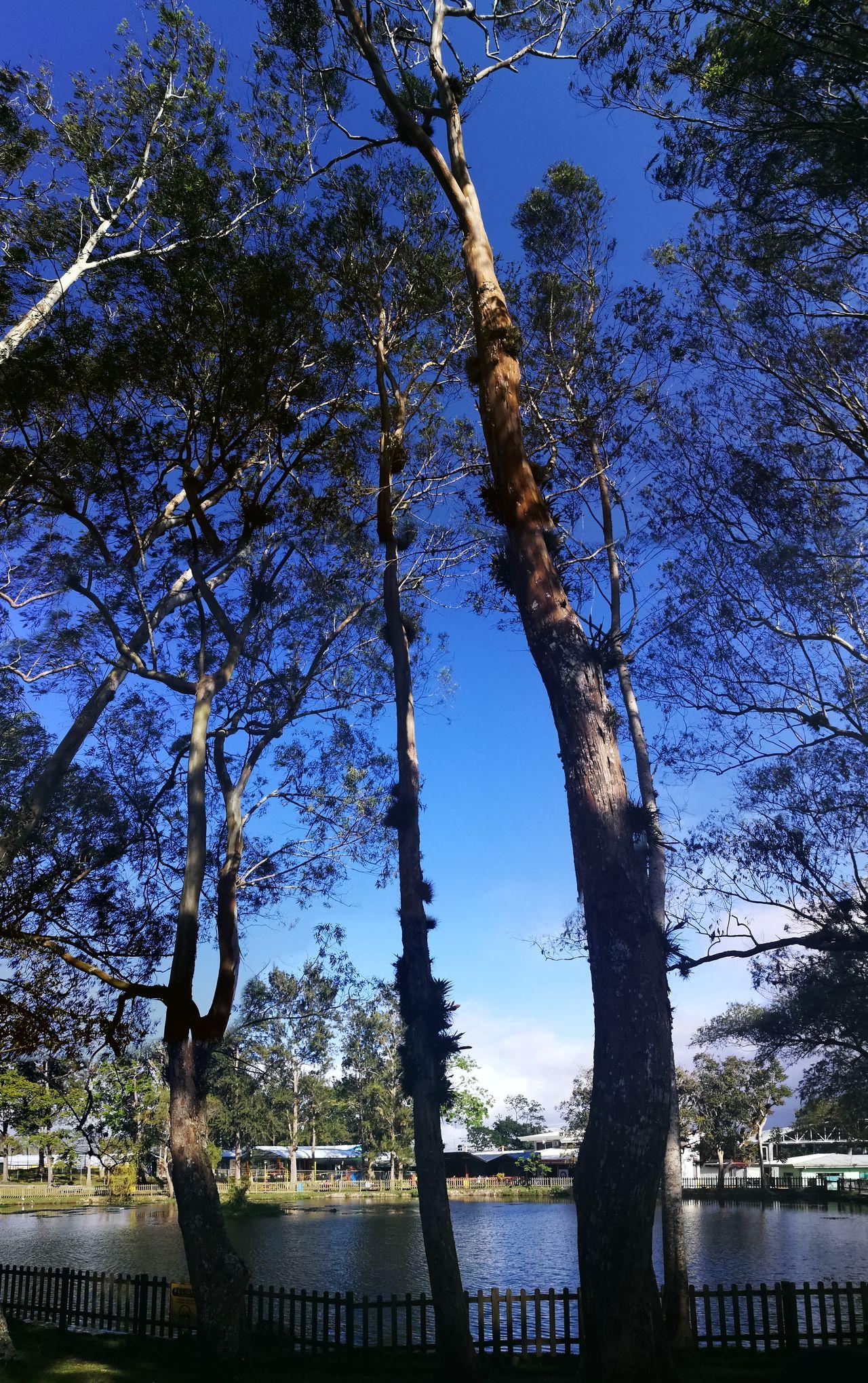 Lake Tree Sky Blue Nature Lake Tec University