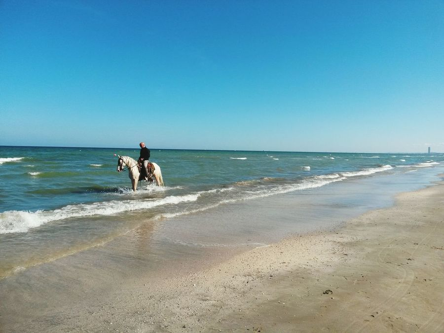 Horse Romagna Italy Cavallo Bianco Cavallo Beach Cesenatico Spiaggia Seaside Summer