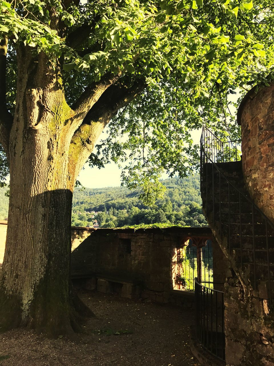 tree, architecture, history, built structure, day, no people, branch, outdoors, nature