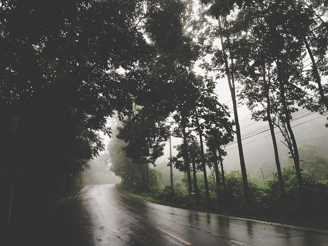 My2016 My Travel  Weekend Relaxing Maehongsontrip Nature Mountain Trip Green Season Rainy Days Foggy Morning Foggy Weather Good Moment Silhouette On The Way Pai
