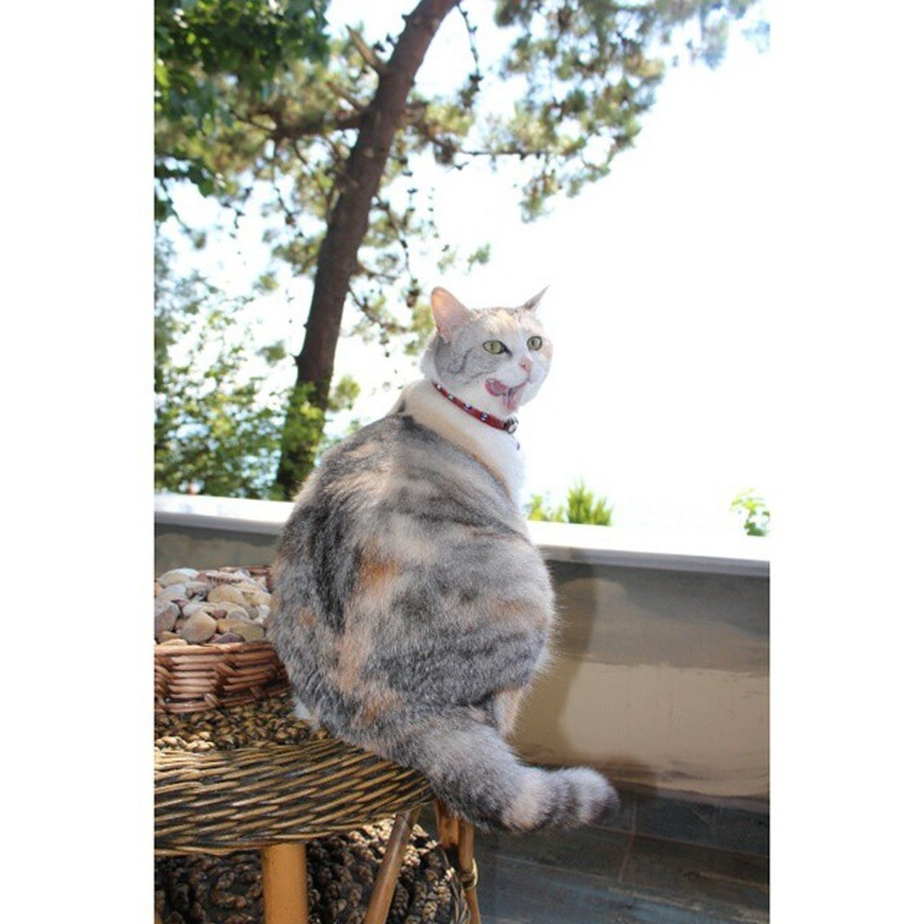 4 gün tatilden sonra kızıma kavuştum.. Kedi Kedidirkedi Candostu Editsiz buinstagramdakedivar cat