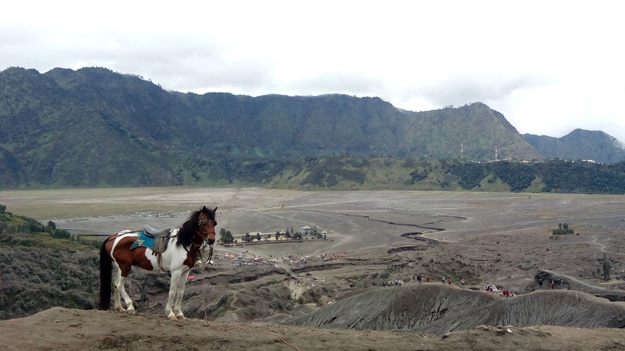 Bromo East Java Horse Cloud - Sky Animal Themes Outdoors Mountain Landscape Sky People Desert Tourism Beauty In Nature Animals In The Wild Nature Volcano Outdoor Pictures Outdoor Activ Outdoorlife
