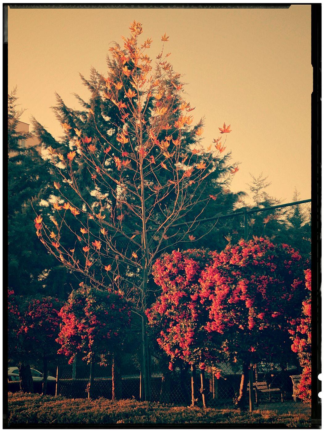 Autumn Colors Colors Of Autumn
