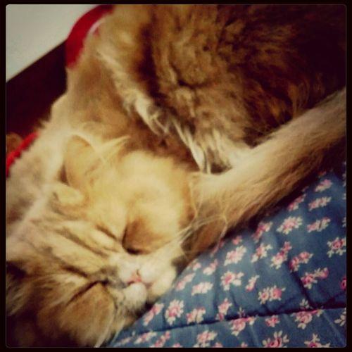 Meu fofo! Meu ❤ Cat Relaxing Amor