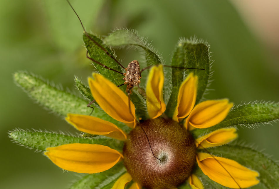 Beautiful stock photos of insects, Sitting, beauty In Nature, bloom, blossom