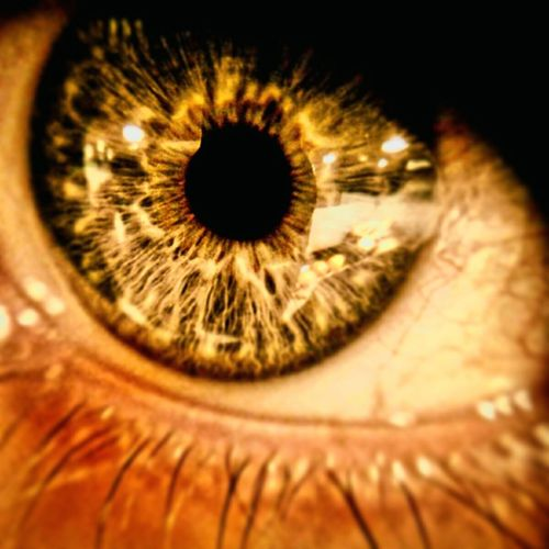Golden Eye Gold EyeEm Eye Macro_collection Macro Photography Macro Looking At Camera Iris - Eye Human Eye