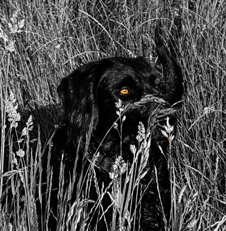 Blackandwhite Black And White Black & White Black And White Photography EyeEm Dog Emma ♡ Labradoodle Black Dog Eyes Eyes Never Lie Amazing Eyes EyeEm Best Shots