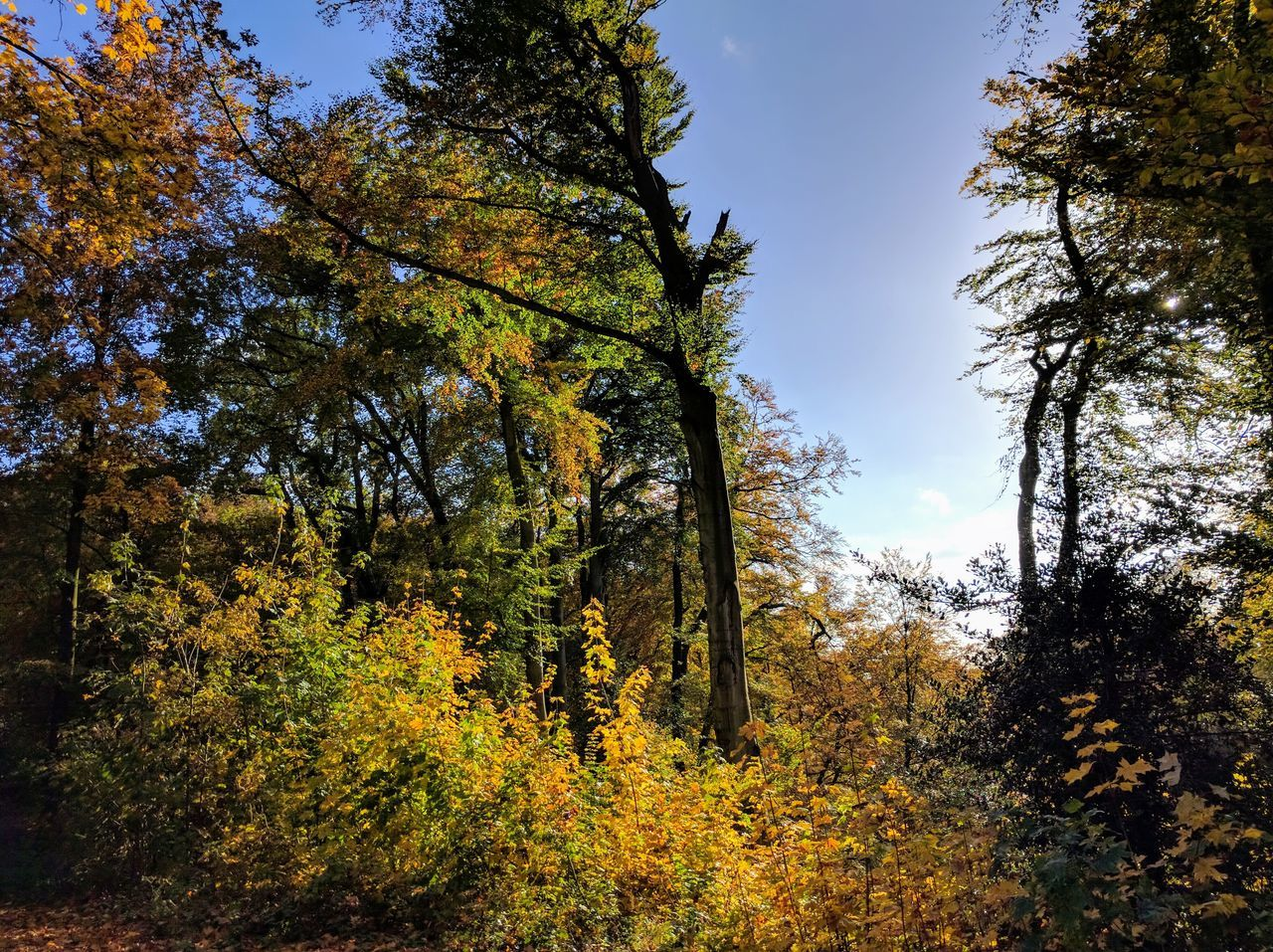 tree, autumn, nature, beauty in nature, forest, scenics, leaf, change, tranquility, growth, tranquil scene, no people, day, non-urban scene, outdoors, sky, low angle view, landscape, branch, tree trunk