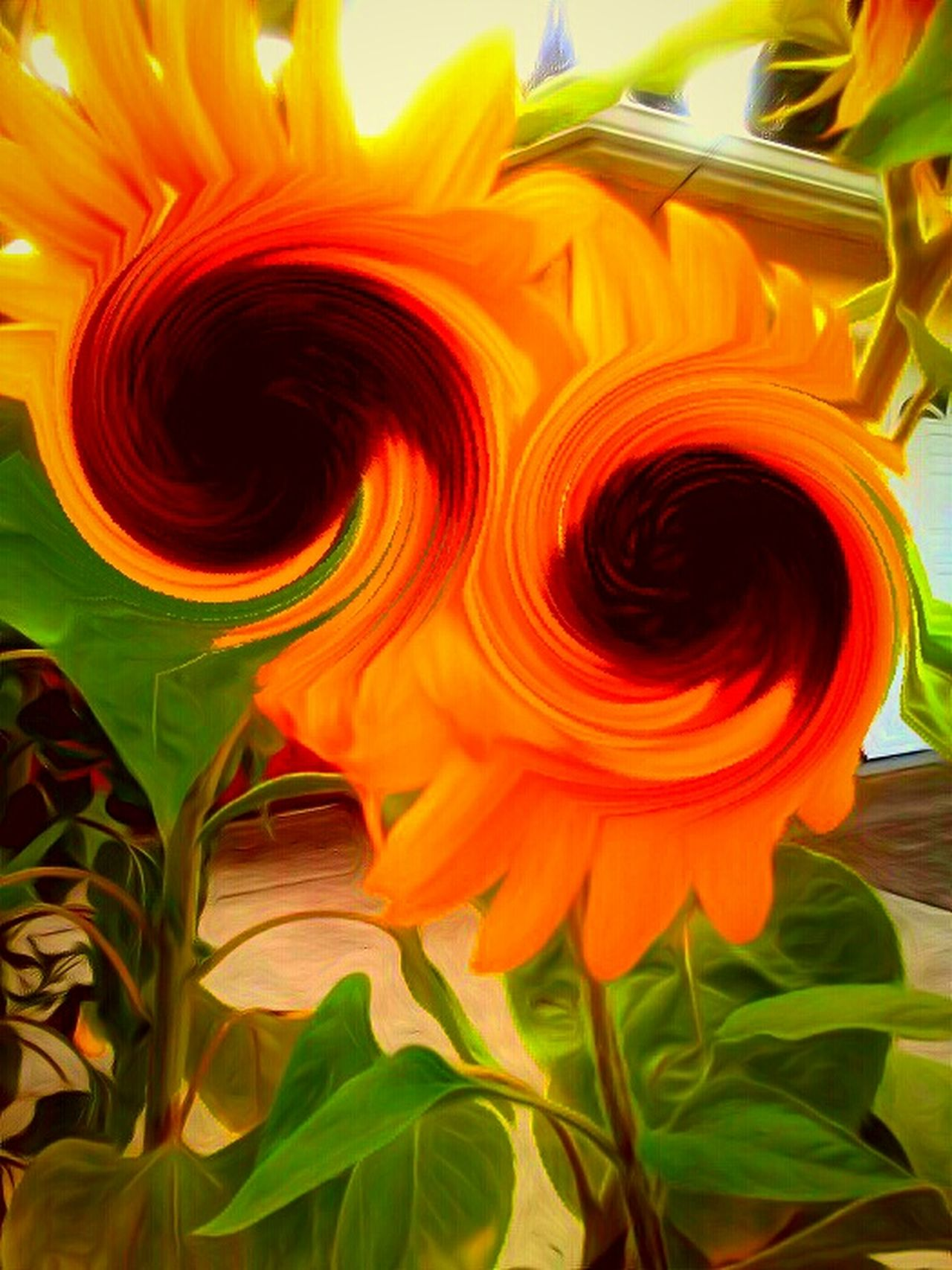 Sunflower 🌻 Sunflower Swirl Vangogh Inspired Dreamy Reality Totally Edited Photo Real Light Portrait Color Portrait Colorful Live In The Moment Nature Photography Natural Light Portrait Flower Porn...literally🌸 Natures Diversities Being Present Swirlyflowers Swirls Isnt Nature Grand? My Favorite Place My Garden Ubu&I'llbme