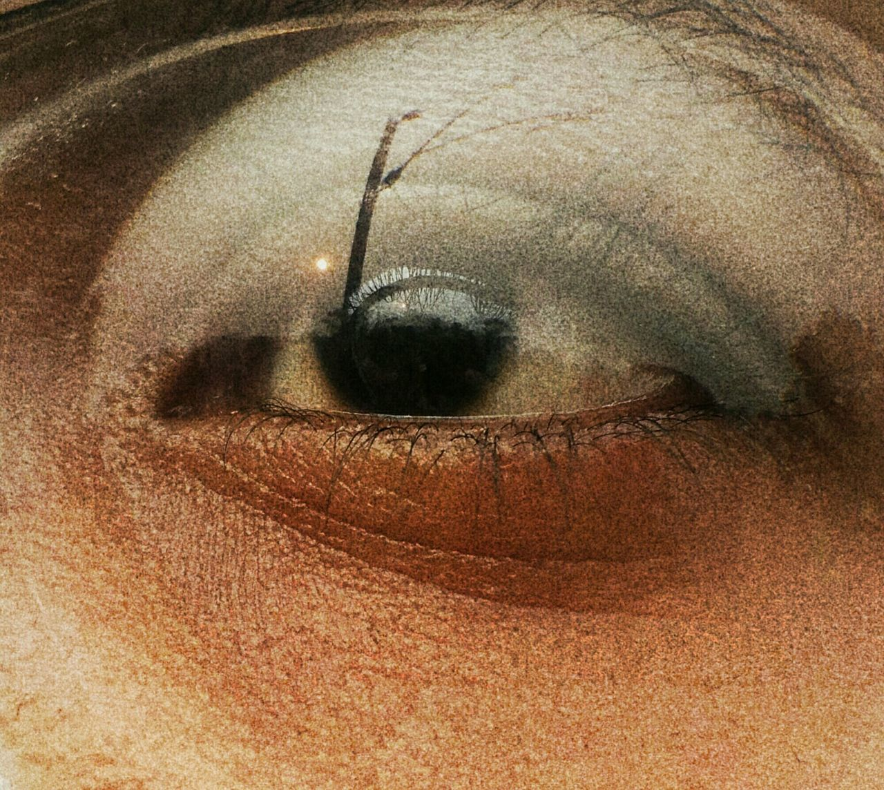 Eye Braxus Abstract Reflections Memory Primordial Sunset Skin Pores Light Close-up Beauty Human Body Part Sunsets