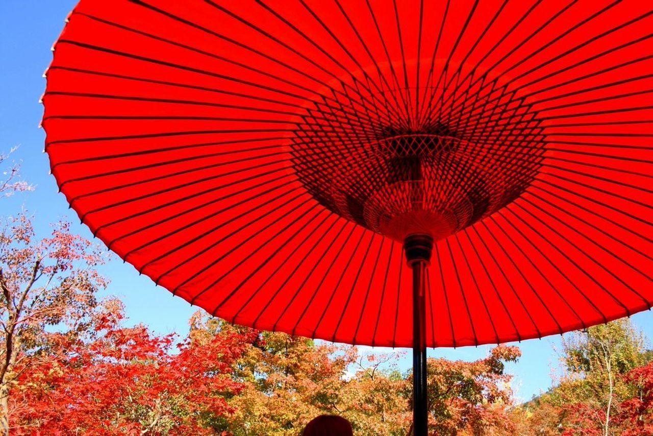 Autumn Leaves Kyoto Japan 永観堂 わらび餅 みたらし団子 美味