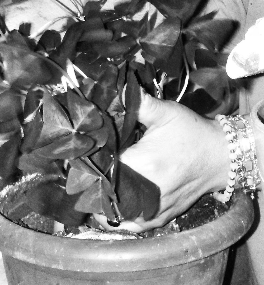My mom's Love. Replanting my plants❤💞 Human Hand Blancoynegro Flowerporn Black And White EyeEm Best Shots - Nature Blackandwhite EyeEm Nature Lover Nem Nature Bnw_friday_eyeemchallenge Flower Close-up Beauty In Nature Nature Plant Bnw Bnw_collection Life In Hands Bnw_eyeemchallenge_theme Miraculous Monochrome March Leaves Plants Plants And Flowers Black & White Black And White Photography Macroclique
