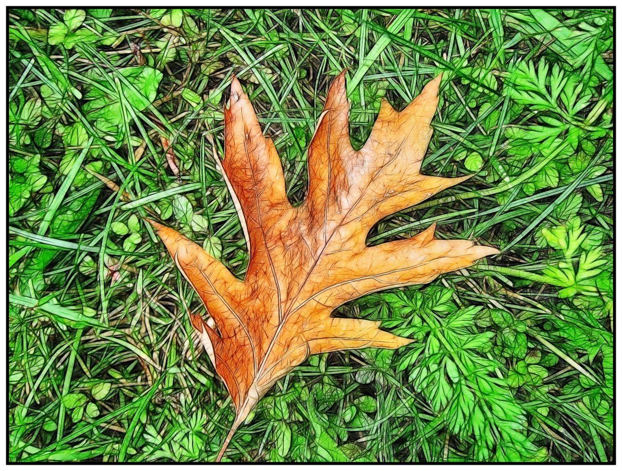 Capture The Moment Autumn Leaf Autumn Sketch Macro Beauty