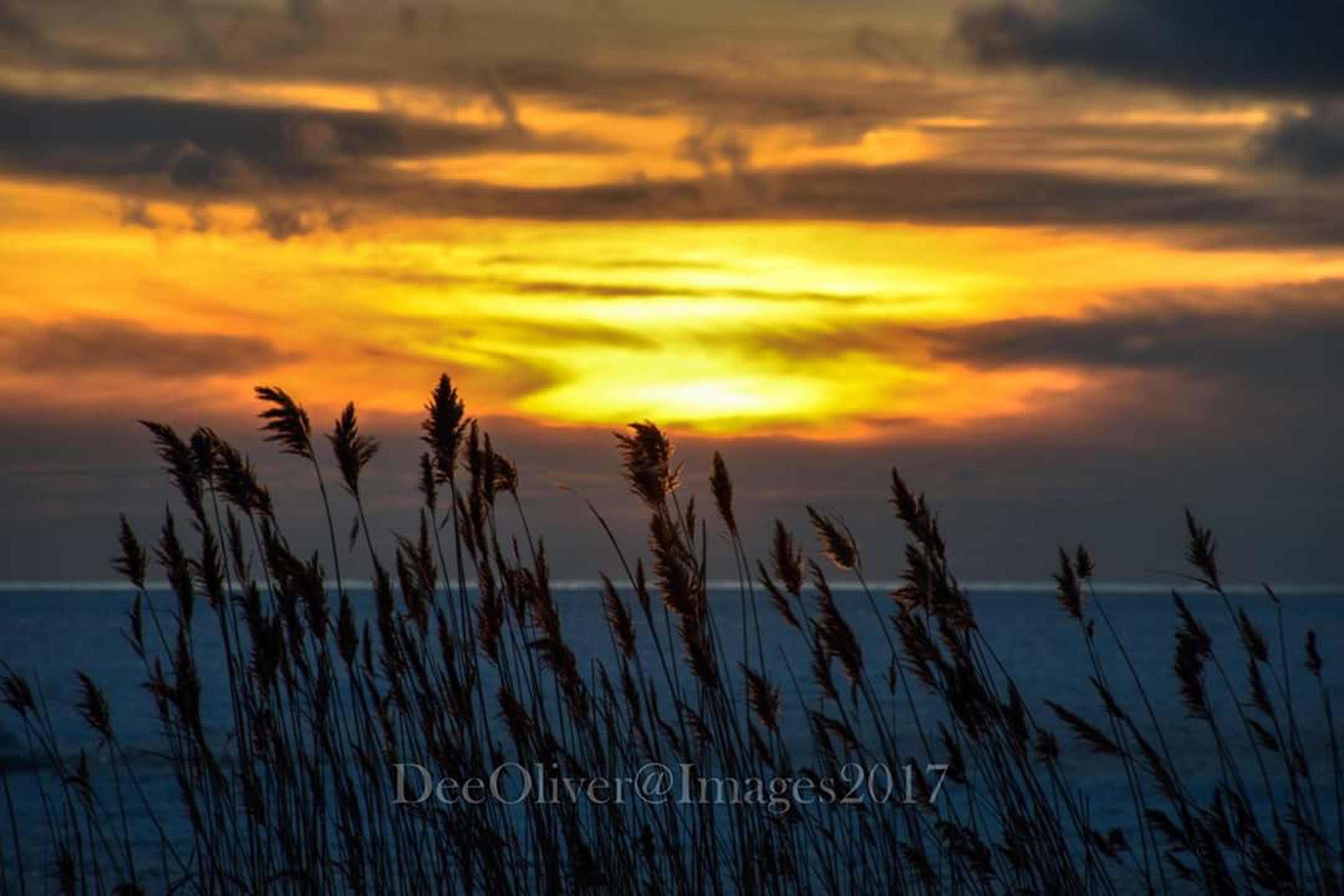 sunset, nature, cloud - sky, outdoors, no people, growth, sky, scenics, beauty in nature, tranquility, silhouette, landscape, tree, marram grass, day
