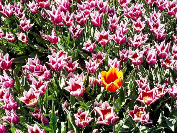 Resist Flowers Orange Color Orange Flower p Pink Flower Spring Pepole EeYem Best Shots l Love To Take Photos ❤ White White Flowers Green Tulips🌷 Turkey