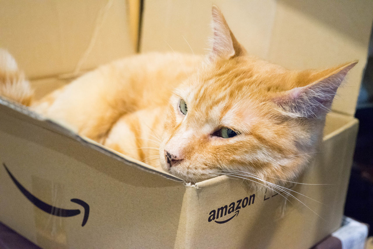 pets, domestic animals, domestic cat, one animal, indoors, mammal, animal themes, cardboard box, feline, whisker, no people, close-up, ginger cat, day