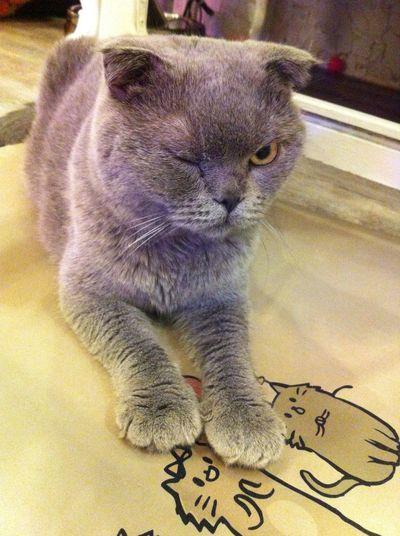 Cat cat 3