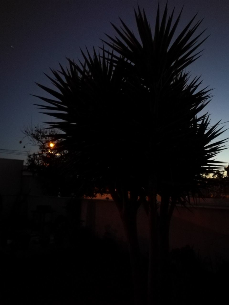 silhouette, tree, palm tree, night, illuminated, growth, outdoors, nature, sky, clear sky, beauty in nature, no people