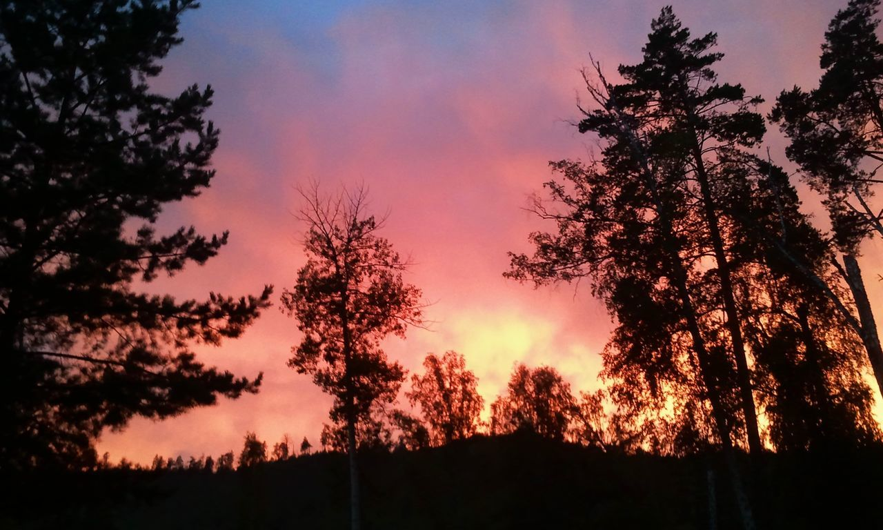 Закат похожий на пожар. Sunset Tree Igniting Nature Landscape Beauty In Nature Outdoors Sky No People Россия взаимнаяподписка Природа
