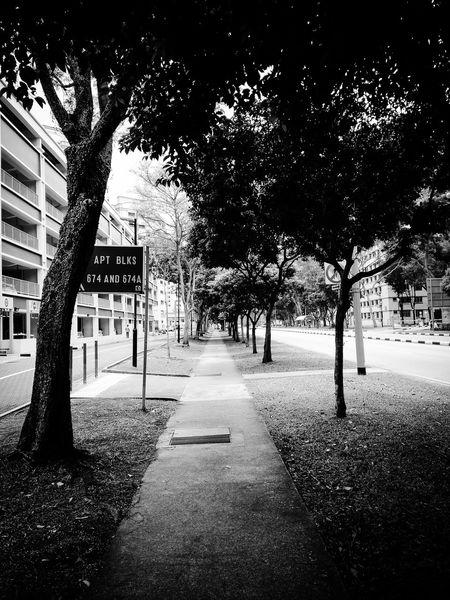 Here Belongs To Me Morning walk Symmetryporn Walingalongtheroad Nature Photography Eyeem Black And White Eyemphotography Singapore City Singapore View