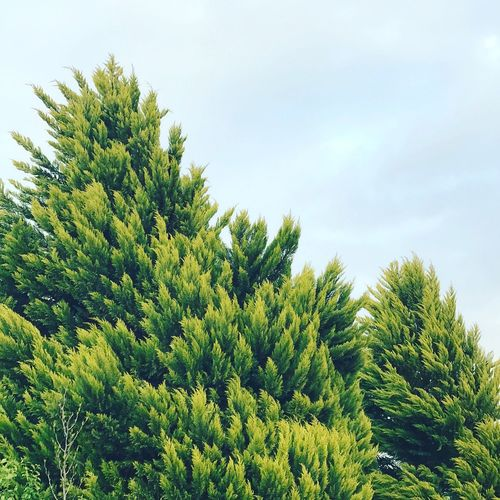 Growth Green Nature No People Green Color Sky Day Low Angle View Beauty In Nature Tree Outdoors Freshness