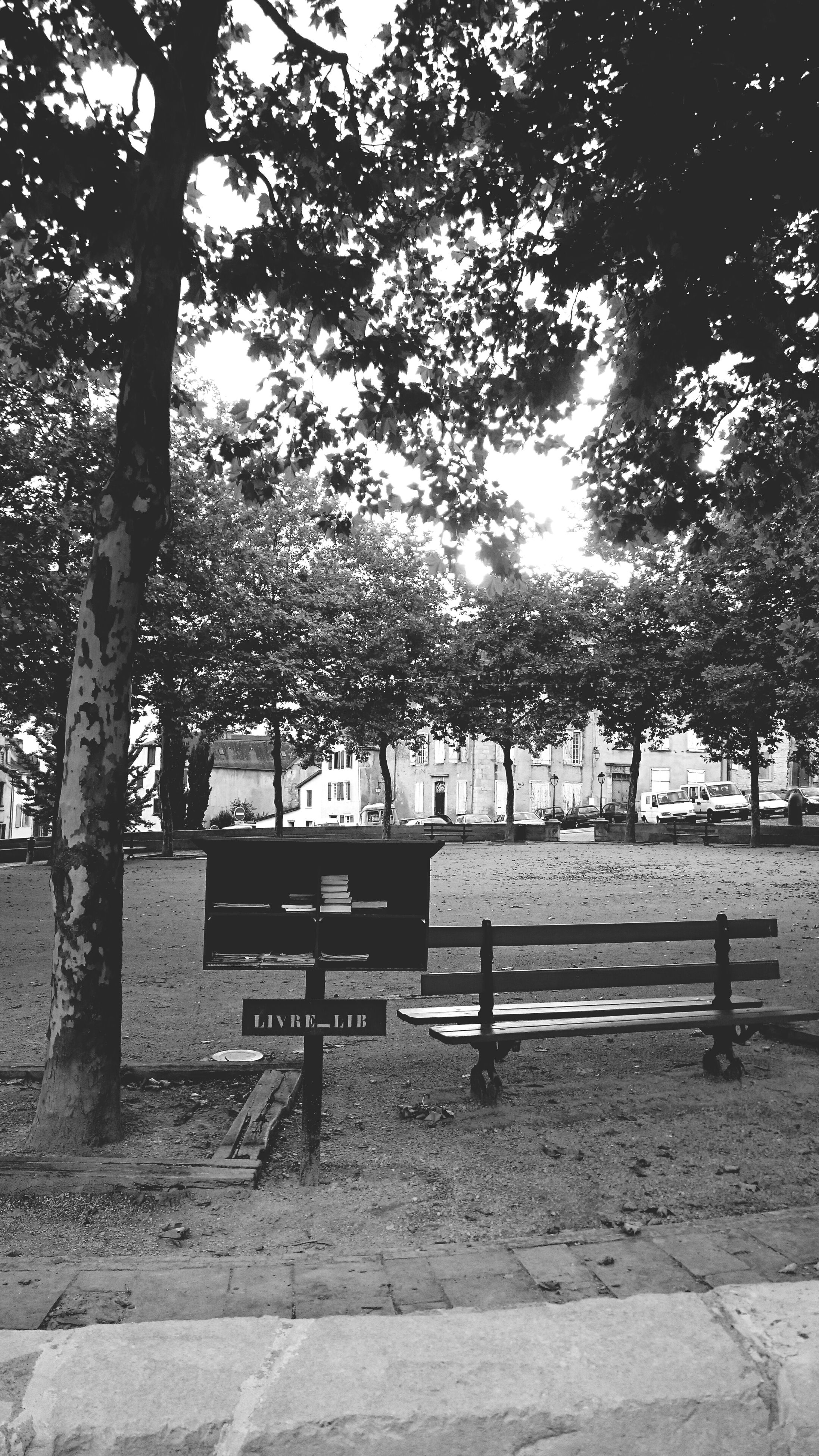 tree, bench, park - man made space, growth, empty, park bench, branch, absence, park, nature, tranquility, sunlight, day, shadow, outdoors, seat, footpath, railing, sidewalk, no people