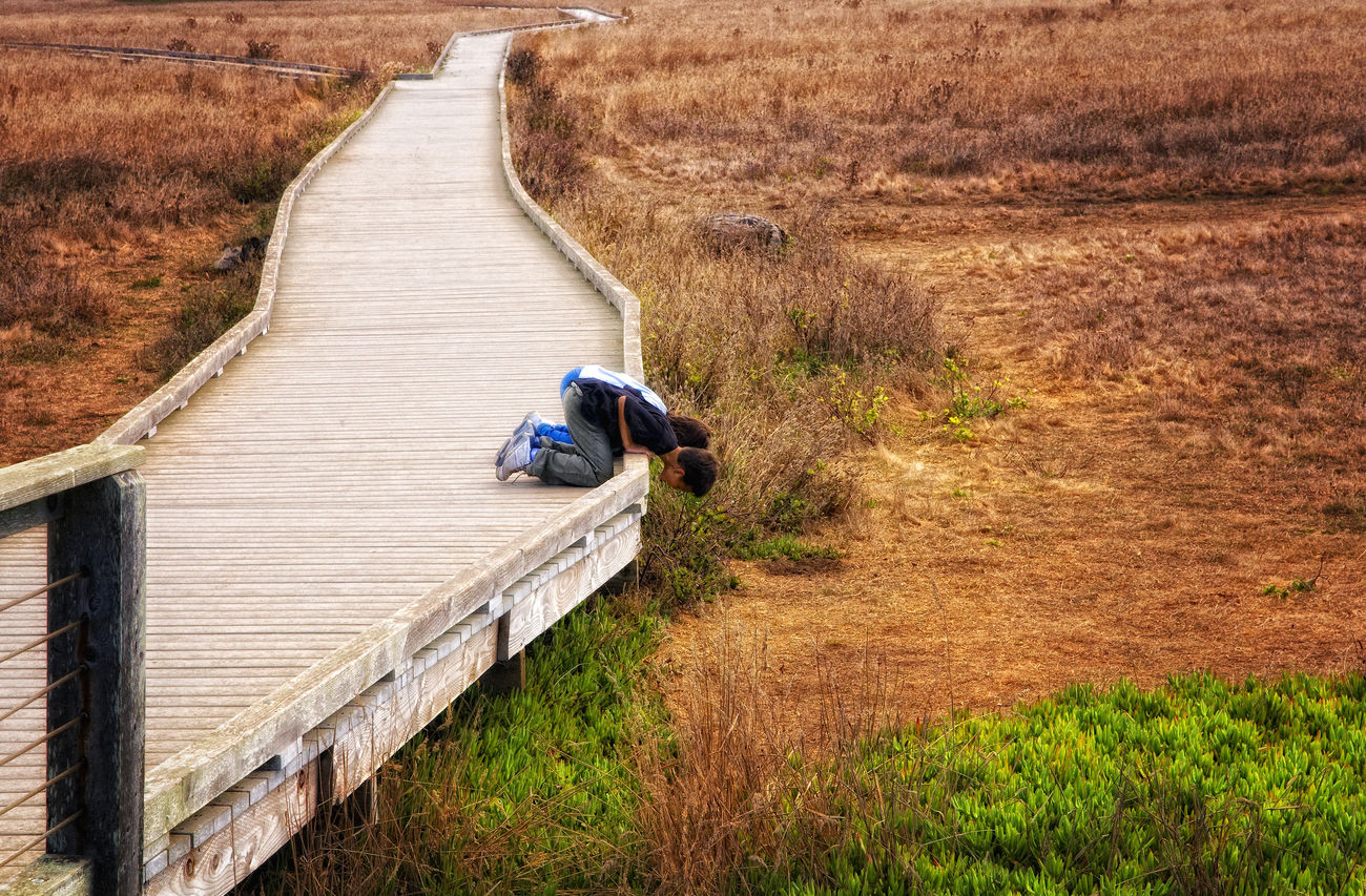 Kids looking for ground squirrels in Northern CA. Kids Being Kids Pathway Wooden Pathway