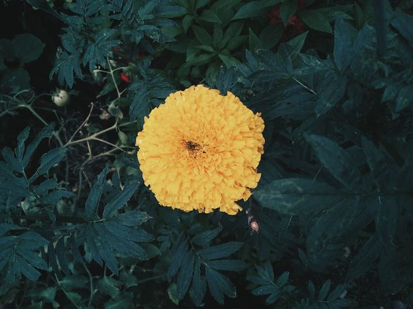 Flower Head Flower Yellow Fragility Freshness Nature Petal Beauty In Nature Day EyeEmNewHere
