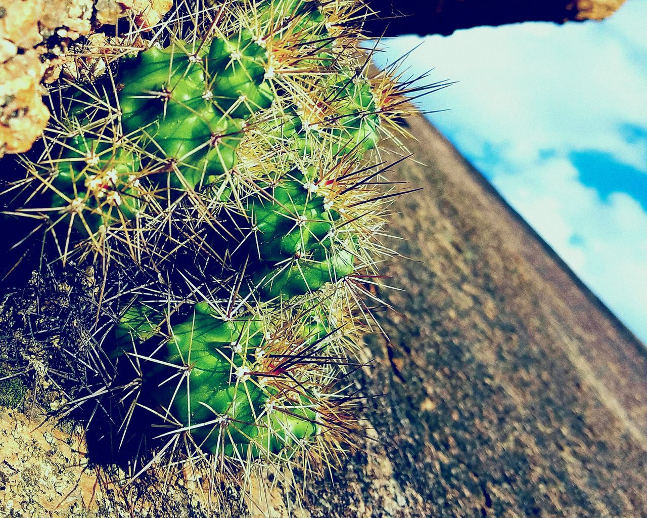 Close-up Nature Outdoors Focus On Foreground Non-urban Scene Vintage Grainy Texture Cactus Texas