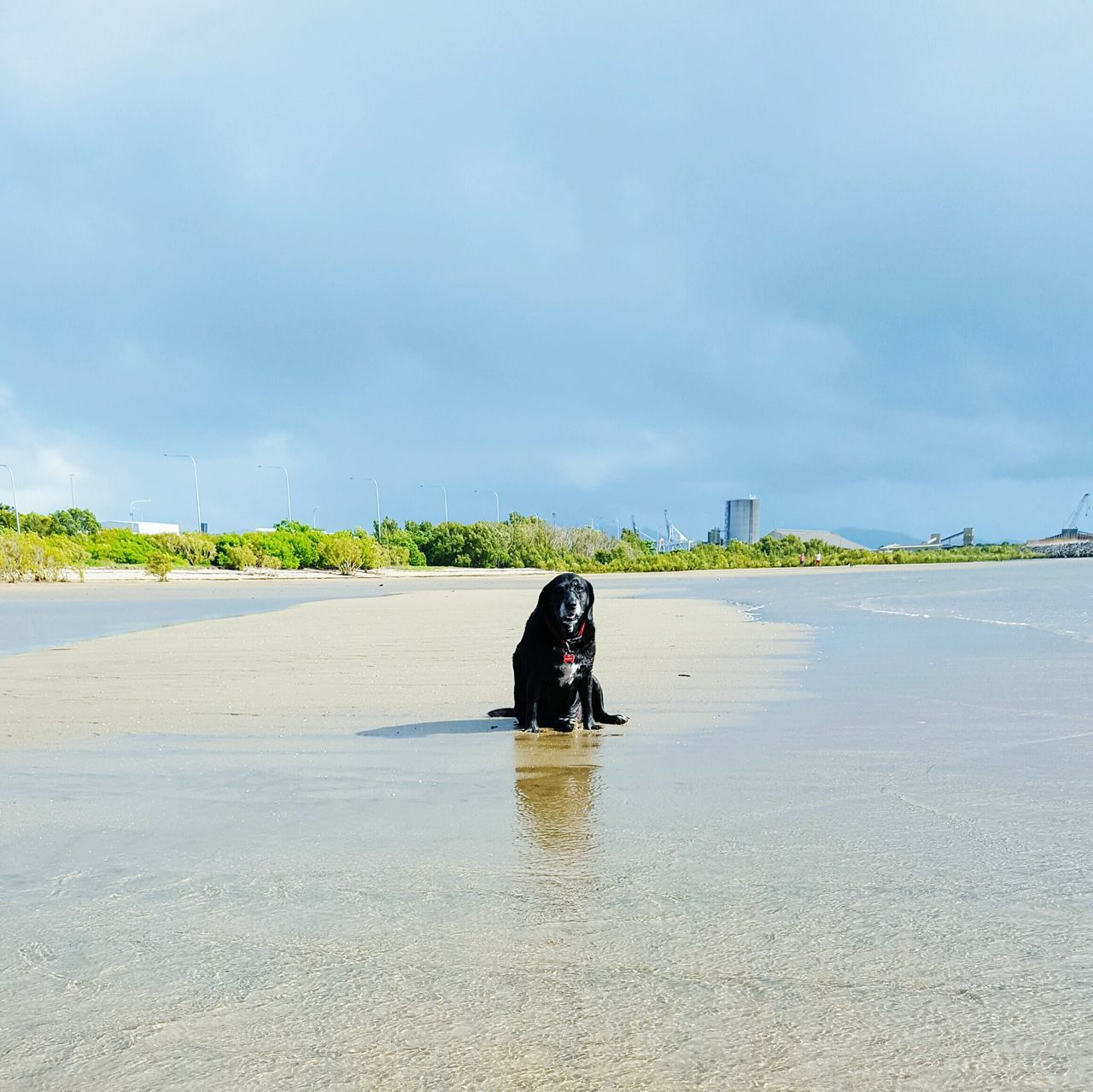 Water Reflection Sky Outdoors Nature Day Beach Beauty In Nature Dog Old Black Lonely Health Activity Pets Depression Long Goodbye