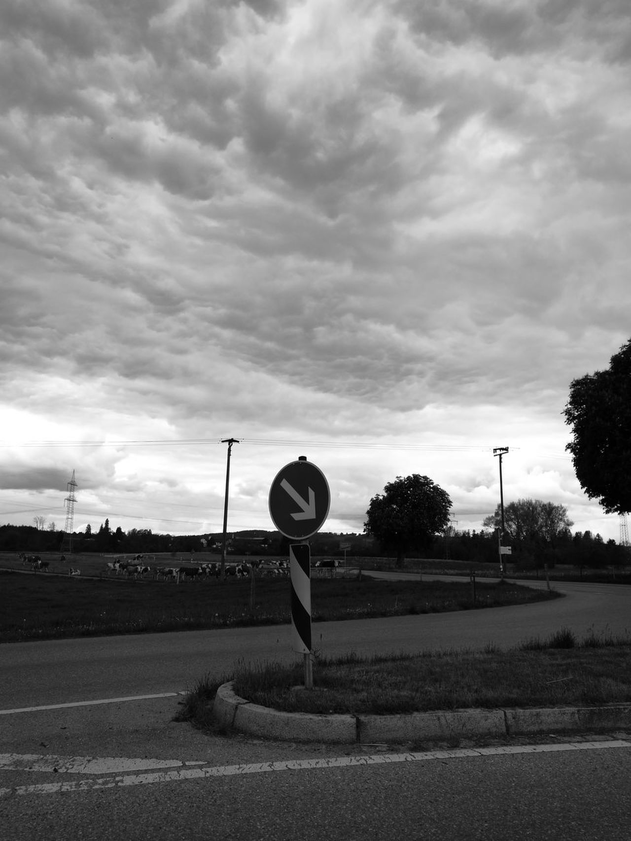 Cloud - Sky Communication Day Direction Guidance Nature No People Outdoors Road Road Sign Sky Speed Limit Sign Transportation Tree